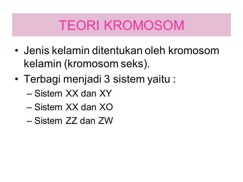 TEORI KROMOSOM Jenis kelamin ditentukan oleh kromosom kelamin (kromosom seks). Terbagi menjadi 3 sistem yaitu : –Sistem XX dan XY –Sistem XX dan XO –S