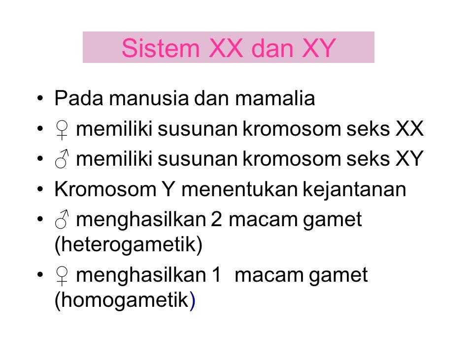 Sistem XX dan XY Pada manusia dan mamalia ♀ memiliki susunan kromosom seks XX ♂ memiliki susunan kromosom seks XY Kromosom Y menentukan kejantanan ♂ m