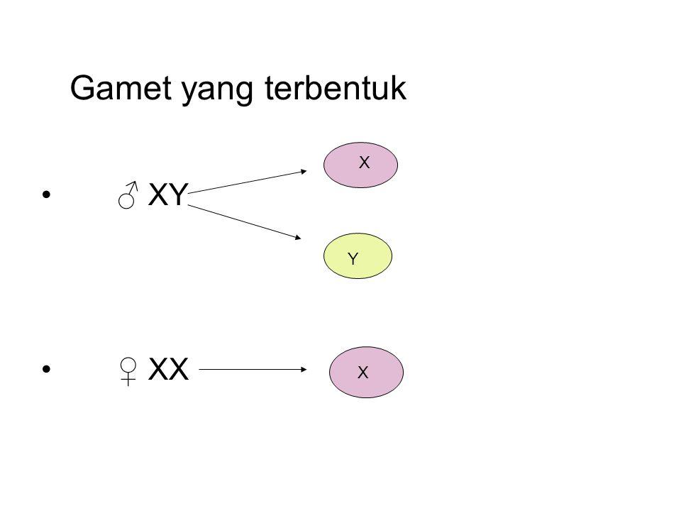 Gamet yang terbentuk ♂ XY ♀ XX X Y X