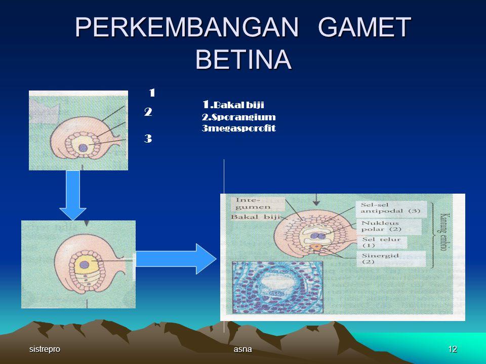 sistreproasna11 PERKEMBANGAN SERBUK SARI SERBUK SARI JATUH PADA KEPALA PUTIK INTI SERBUK SARI MENGALAMI PEMBELAHAN MENGHASILKAN DUA INTI (INTI VEGETATIF DAN INTI GENERATIF ) INTI GENERATIF MENGALAMI PEMBELAHAN MENGHASILKAN 2 INTI SPERMA