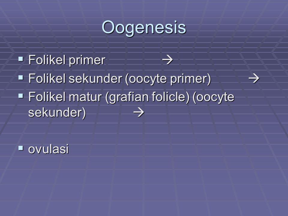 Folikel primodial = ovum yg dilapisi selapis sel epiteloid granulosa pubertas Folikel primodial (folikel primer)  folikel matur  Folikel yg sdg tumbuh (pertumbuhan & perkembangan)  Setiap siklus 20 folikel  tp hanya 1 yg terus tumbuh, yg lain atresia/ involusi  Ø 1-1,5 cm saat ovulasi
