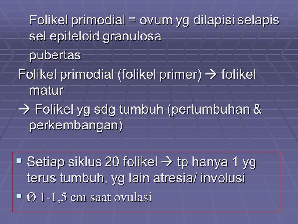 Folikel primodial = ovum yg dilapisi selapis sel epiteloid granulosa pubertas Folikel primodial (folikel primer)  folikel matur  Folikel yg sdg tumb