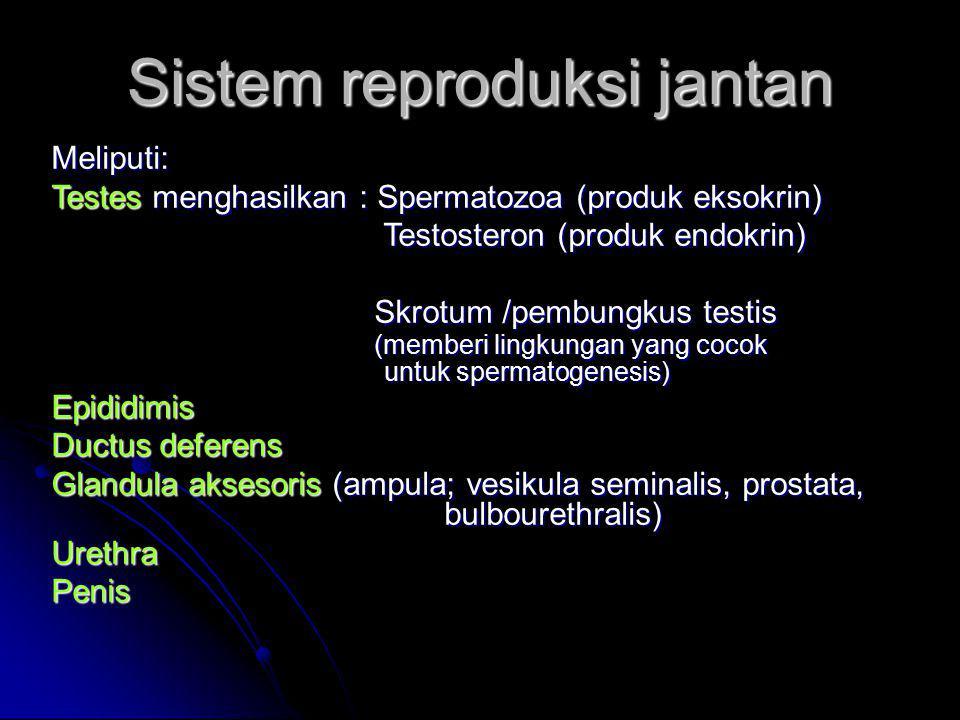 Sistem reproduksi jantan Meliputi: Testes menghasilkan : Spermatozoa (produk eksokrin) Testosteron (produk endokrin) Testosteron (produk endokrin) Skr