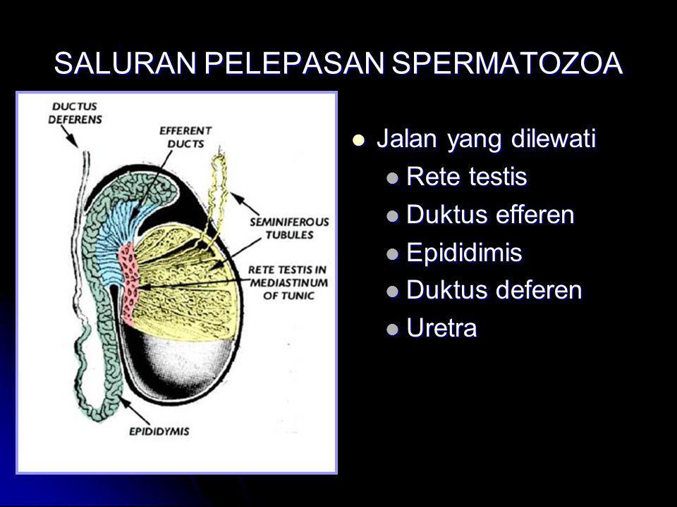 SALURAN PELEPASAN SPERMATOZOA Jalan yang dilewati Jalan yang dilewati Rete testis Duktus efferen Epididimis Duktus deferen Uretra