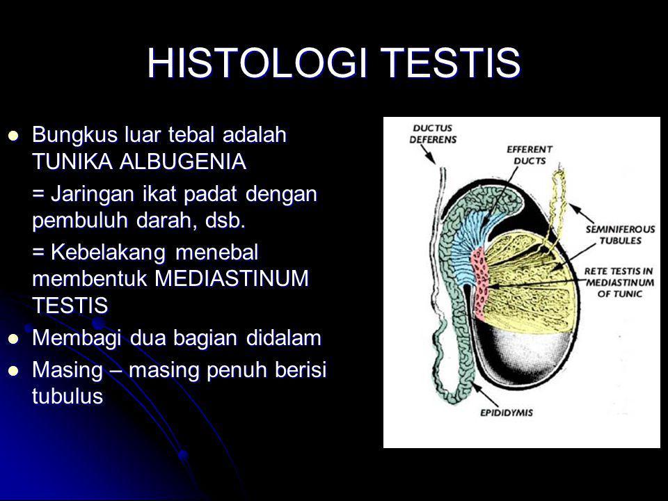 HISTOLOGI TESTIS Bungkus luar tebal adalah TUNIKA ALBUGENIA Bungkus luar tebal adalah TUNIKA ALBUGENIA = Jaringan ikat padat dengan pembuluh darah, ds