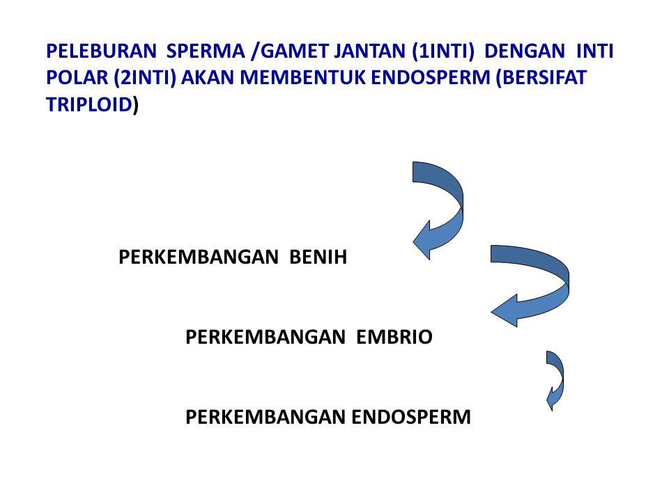 PERKEMBANGAN BENIH PERKEMBANGAN EMBRIO PERKEMBANGAN ENDOSPERM PELEBURAN SPERMA /GAMET JANTAN (1INTI) DENGAN INTI POLAR (2INTI) AKAN MEMBENTUK ENDOSPERM (BERSIFAT TRIPLOID)