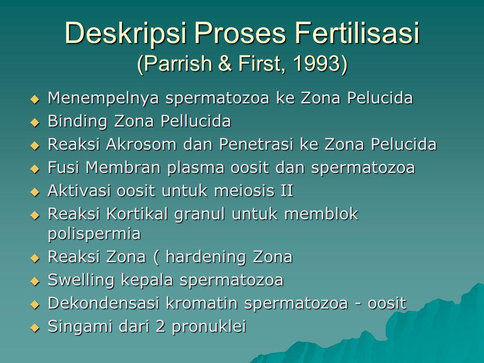 Deskripsi Proses Fertilisasi (Parrish & First, 1993)  Menempelnya spermatozoa ke Zona Pelucida  Binding Zona Pellucida  Reaksi Akrosom dan Penetrasi ke Zona Pelucida  Fusi Membran plasma oosit dan spermatozoa  Aktivasi oosit untuk meiosis II  Reaksi Kortikal granul untuk memblok polispermia  Reaksi Zona ( hardening Zona  Swelling kepala spermatozoa  Dekondensasi kromatin spermatozoa - oosit  Singami dari 2 pronuklei