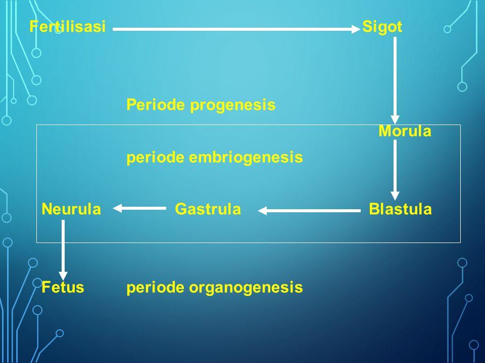 Fertilisasi Sigot Periode progenesis Morula periode embriogenesis NeurulaGastrulaBlastula Fetusperiode organogenesis