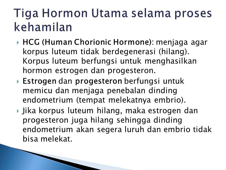  HCG (Human Chorionic Hormone): menjaga agar korpus luteum tidak berdegenerasi (hilang).