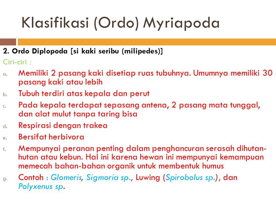 Klasifikasi (Ordo) Myriapoda 2. Ordo Diplopoda [si kaki seribu (milipedes)] Ciri-ciri : a. Memiliki 2 pasang kaki disetiap ruas tubuhnya. Umumnya memi