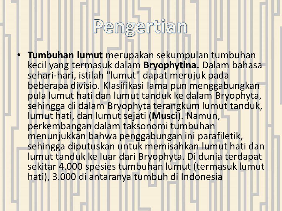 Tumbuhan lumut merupakan sekumpulan tumbuhan kecil yang termasuk dalam Bryophytina.