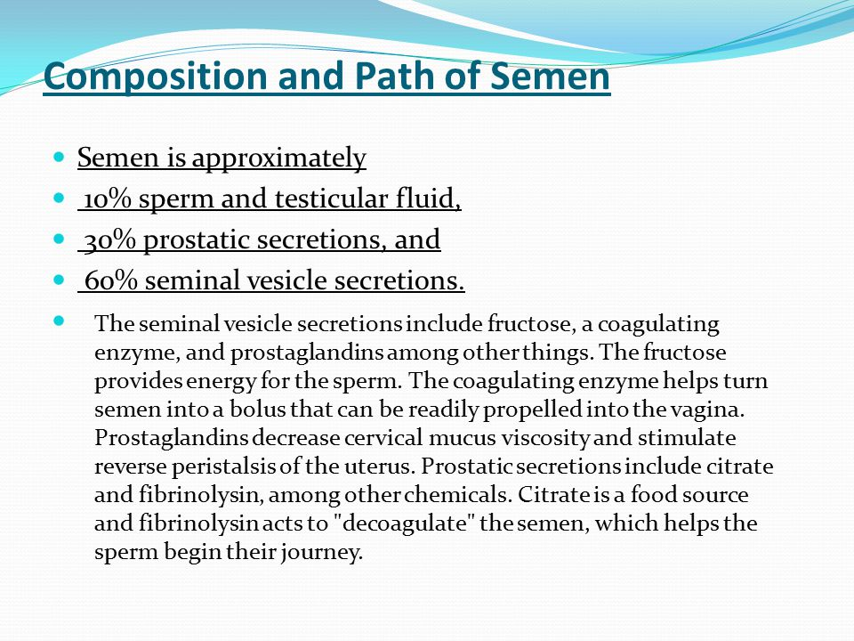 Composition and Path of Semen Semen is approximately 10% sperm and testicular fluid, 30% prostatic secretions, and 60% seminal vesicle secretions. The