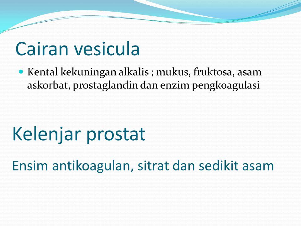 Cairan vesicula Kental kekuningan alkalis ; mukus, fruktosa, asam askorbat, prostaglandin dan enzim pengkoagulasi Kelenjar prostat Ensim antikoagulan,