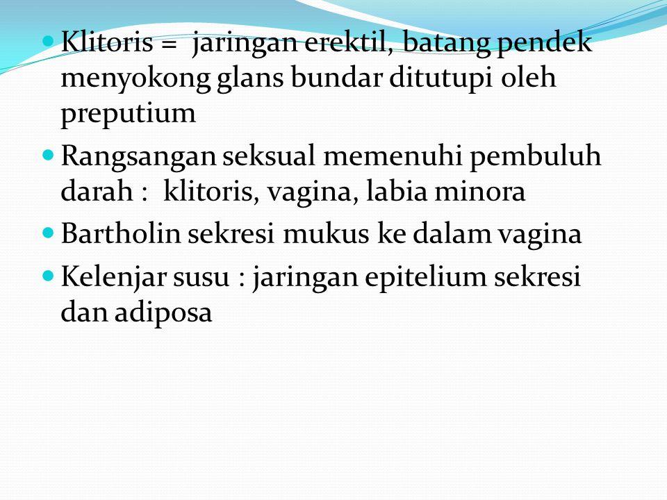Klitoris = jaringan erektil, batang pendek menyokong glans bundar ditutupi oleh preputium Rangsangan seksual memenuhi pembuluh darah : klitoris, vagina, labia minora Bartholin sekresi mukus ke dalam vagina Kelenjar susu : jaringan epitelium sekresi dan adiposa