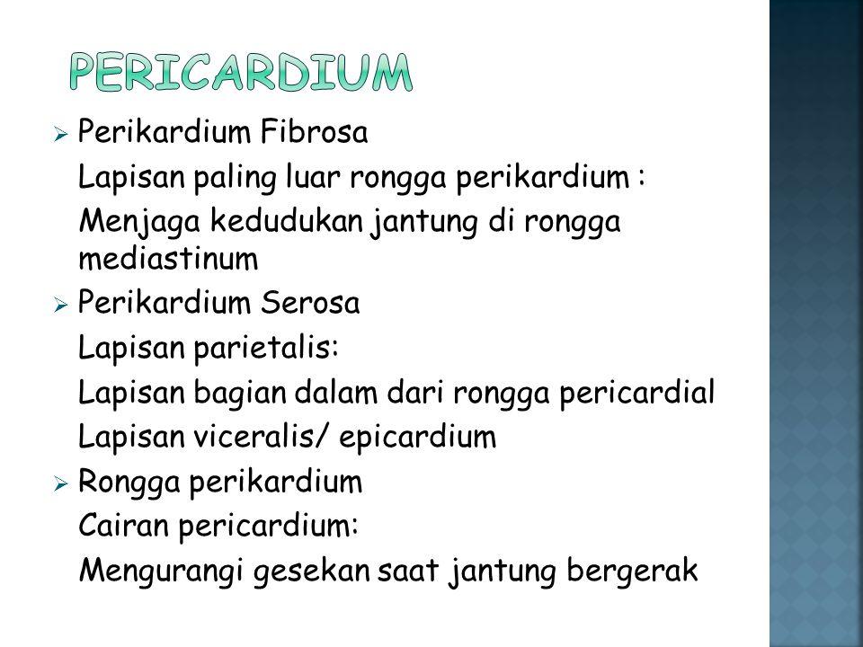  Perikardium Fibrosa Lapisan paling luar rongga perikardium : Menjaga kedudukan jantung di rongga mediastinum  Perikardium Serosa Lapisan parietalis