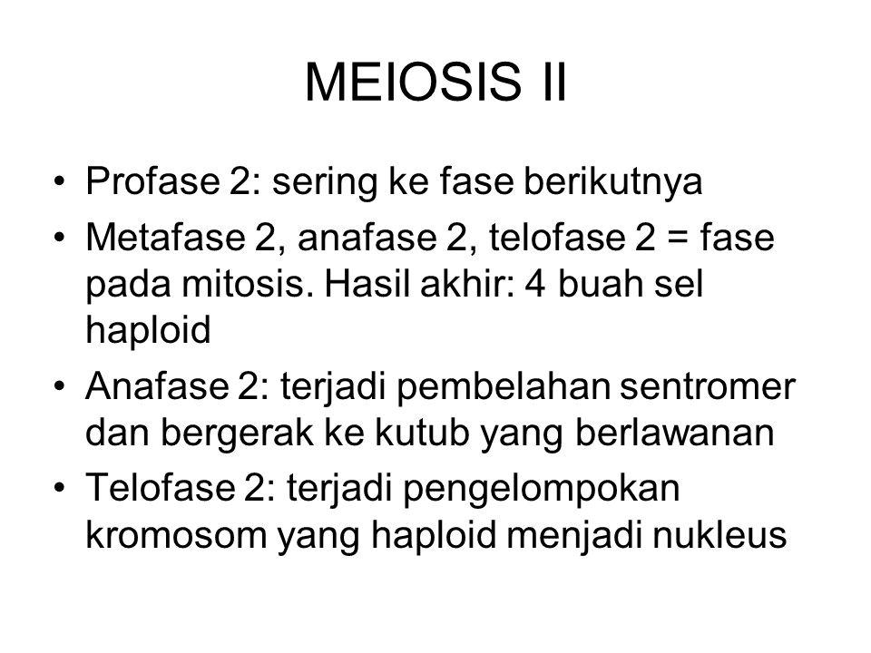 MEIOSIS II Profase 2: sering ke fase berikutnya Metafase 2, anafase 2, telofase 2 = fase pada mitosis. Hasil akhir: 4 buah sel haploid Anafase 2: terj
