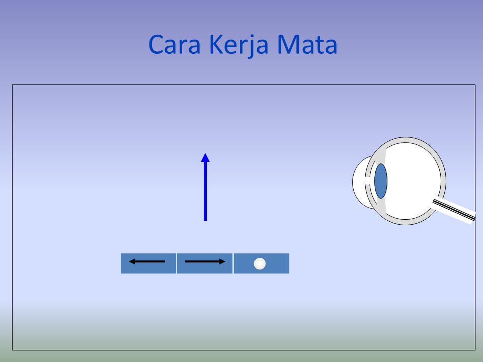 Bagian-bagian pada Mata Bagian-bagian pada Mata Lensa retina pupil kornea iris Bintik buta Syaraf mata Otot akomodasi Bintik kuning