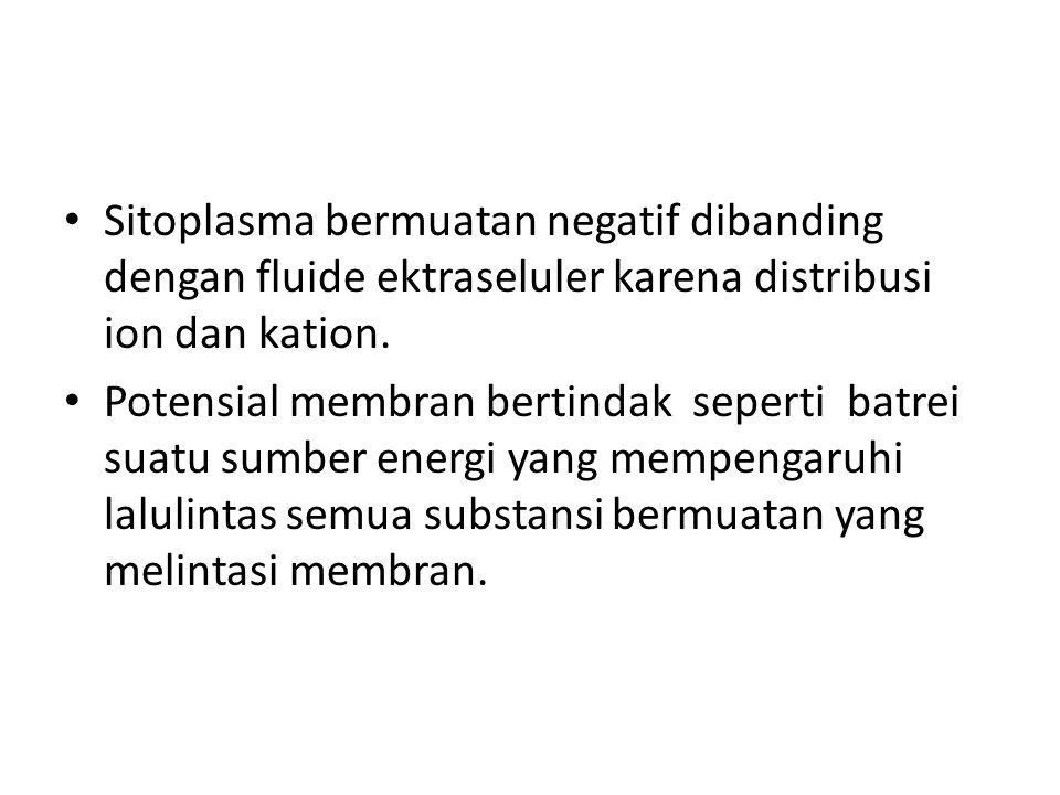 Sitoplasma bermuatan negatif dibanding dengan fluide ektraseluler karena distribusi ion dan kation. Potensial membran bertindak seperti batrei suatu s