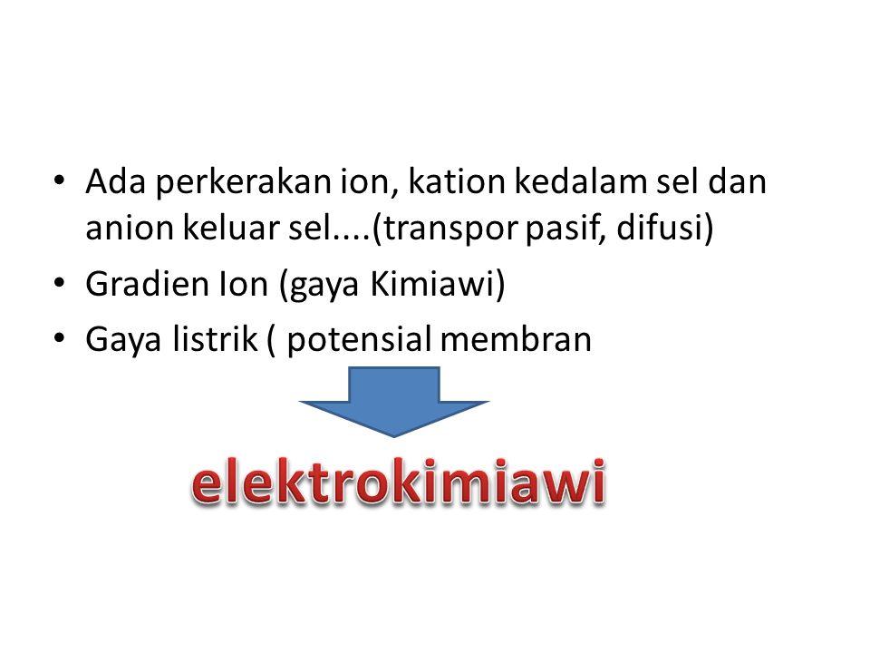 Ada perkerakan ion, kation kedalam sel dan anion keluar sel....(transpor pasif, difusi) Gradien Ion (gaya Kimiawi) Gaya listrik ( potensial membran