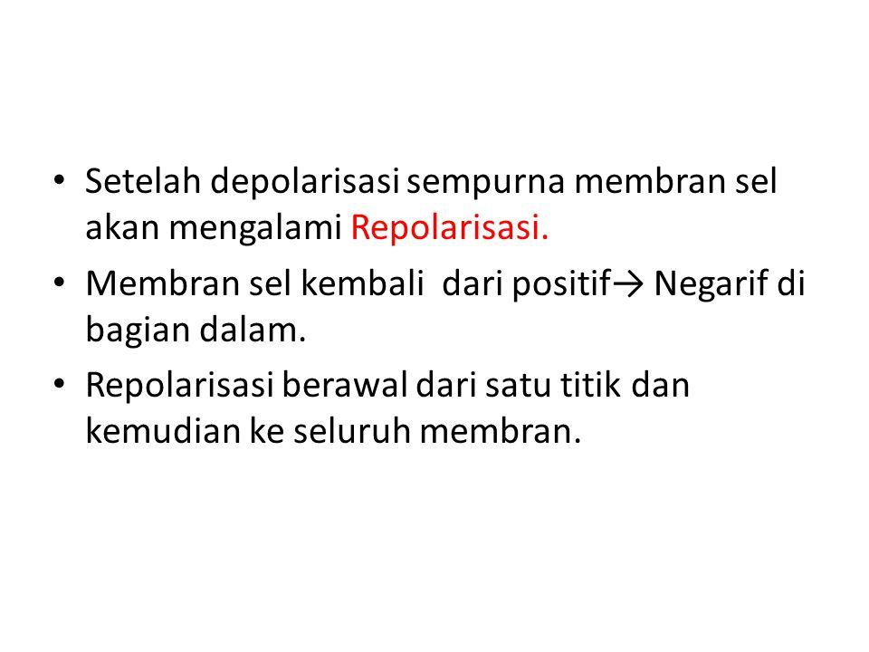 Setelah depolarisasi sempurna membran sel akan mengalami Repolarisasi. Membran sel kembali dari positif→ Negarif di bagian dalam. Repolarisasi berawal