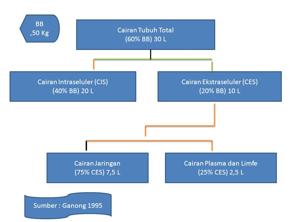 Cairan Tubuh Total (60% BB) 30 L Cairan Ekstraseluler (CES) (20% BB) 10 L Cairan Intraseluler (CIS) (40% BB) 20 L Cairan Plasma dan Limfe (25% CES) 2,5 L Cairan Jaringan (75% CES) 7,5 L Sumber : Ganong 1995 BB,50 Kg