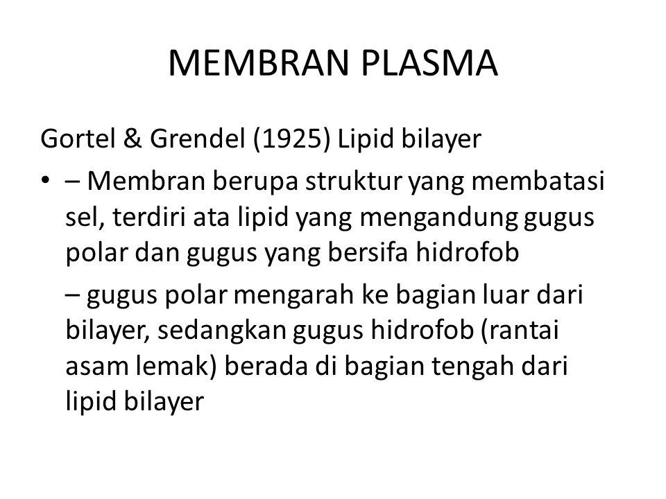 MEMBRAN PLASMA Gortel & Grendel (1925) Lipid bilayer – Membran berupa struktur yang membatasi sel, terdiri ata lipid yang mengandung gugus polar dan gugus yang bersifa hidrofob – gugus polar mengarah ke bagian luar dari bilayer, sedangkan gugus hidrofob (rantai asam lemak) berada di bagian tengah dari lipid bilayer