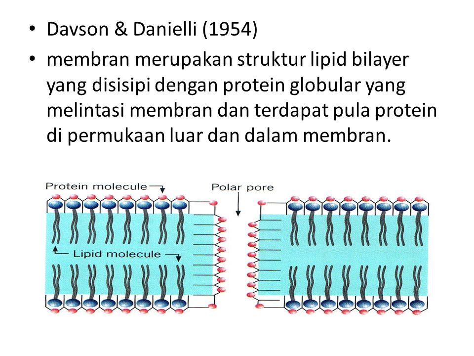 Davson & Danielli (1954) membran merupakan struktur lipid bilayer yang disisipi dengan protein globular yang melintasi membran dan terdapat pula prote