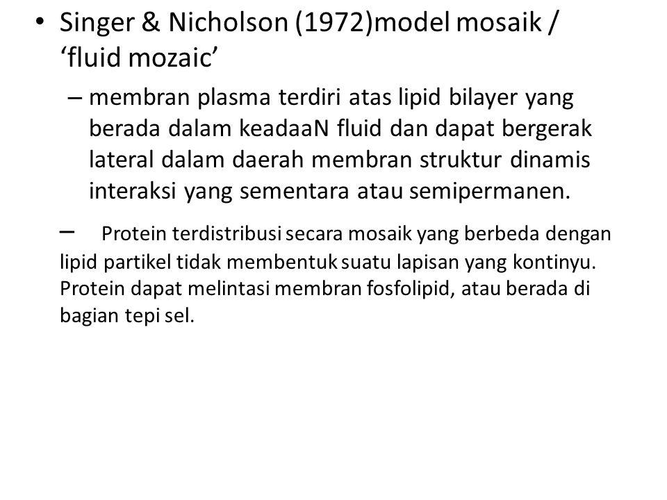 Singer & Nicholson (1972)model mosaik / 'fluid mozaic' – membran plasma terdiri atas lipid bilayer yang berada dalam keadaaN fluid dan dapat bergerak