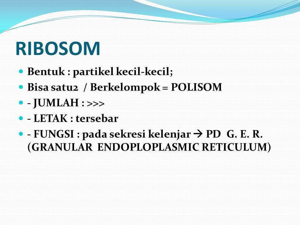 RIBOSOM Bentuk : partikel kecil-kecil; Bisa satu2 / Berkelompok = POLISOM - JUMLAH : >>> - LETAK : tersebar - FUNGSI : pada sekresi kelenjar  PD G. E
