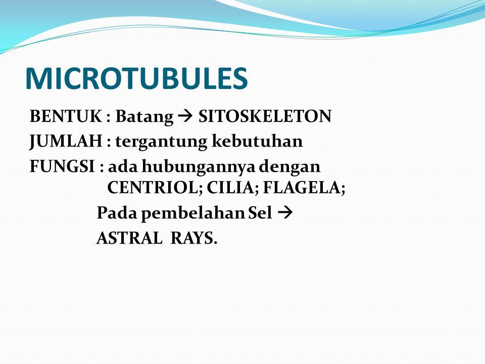 MICROTUBULES BENTUK : Batang  SITOSKELETON JUMLAH : tergantung kebutuhan FUNGSI : ada hubungannya dengan CENTRIOL; CILIA; FLAGELA; Pada pembelahan Se