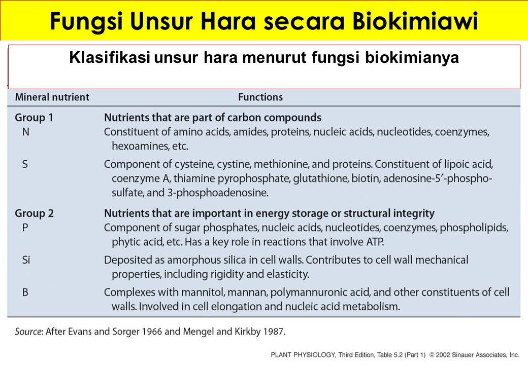 Fungsi Unsur Hara secara Biokimiawi Klasifikasi unsur hara menurut fungsi biokimianya