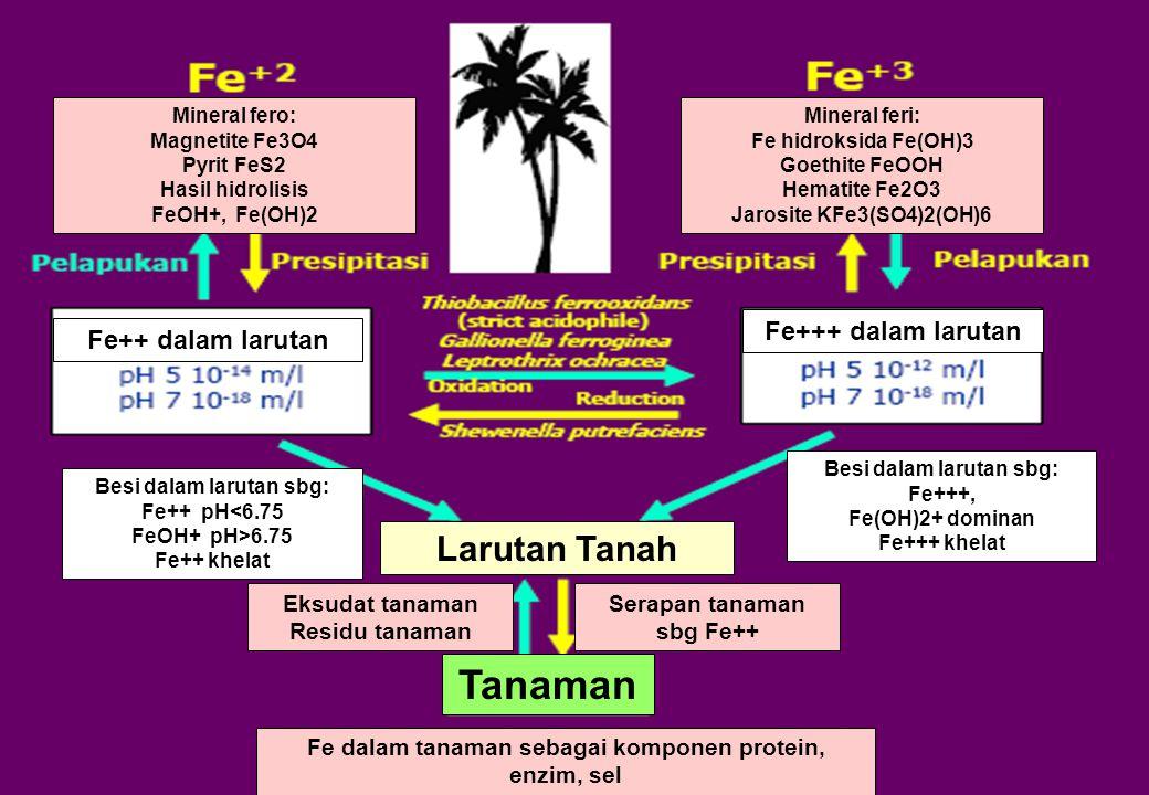 Larutan Tanah Tanaman Fe+++ dalam larutan Fe++ dalam larutan Serapan tanaman sbg Fe++ Eksudat tanaman Residu tanaman Fe dalam tanaman sebagai komponen
