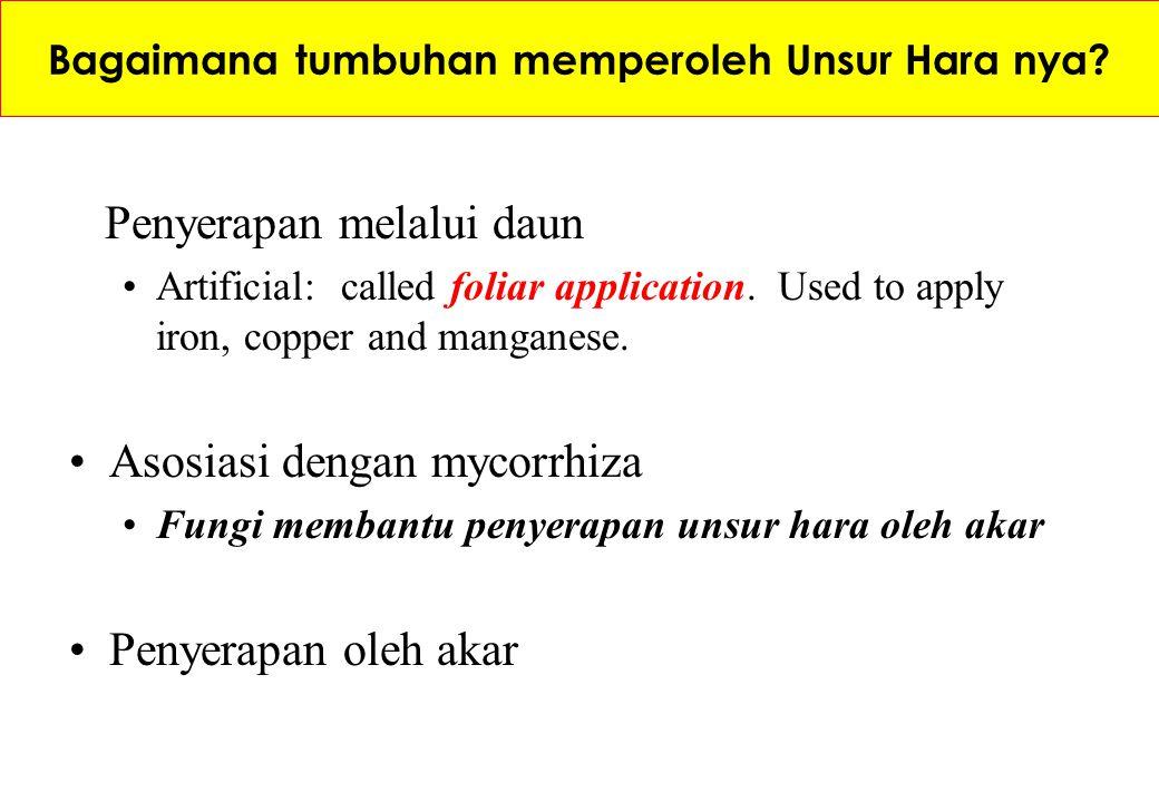 Bagaimana tumbuhan memperoleh Unsur Hara nya? Penyerapan melalui daun Artificial: called foliar application. Used to apply iron, copper and manganese.