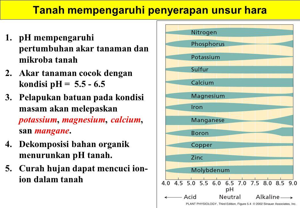 1.pH mempengaruhi pertumbuhan akar tanaman dan mikroba tanah 2.Akar tanaman cocok dengan kondisi pH = 5.5 - 6.5 3.Pelapukan batuan pada kondisi masam