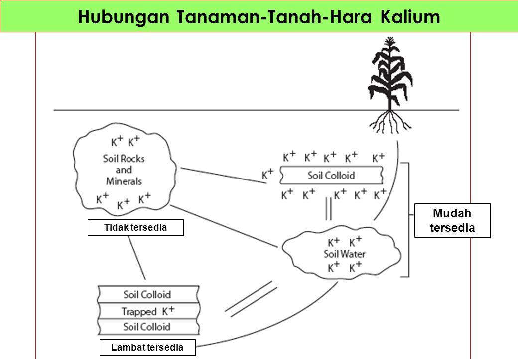 pH mempengaruhbi muatan di permukaan koloid tanah (mineral liat dan bahan organik) pH tinggipH netral KTK tinggi, KTA rendahKTK Rendah, KTA Tinggi Penambahan ion H+