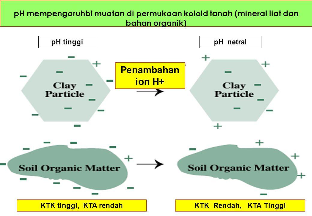 pH mempengaruhbi muatan di permukaan koloid tanah (mineral liat dan bahan organik) pH tinggipH netral KTK tinggi, KTA rendahKTK Rendah, KTA Tinggi Pen