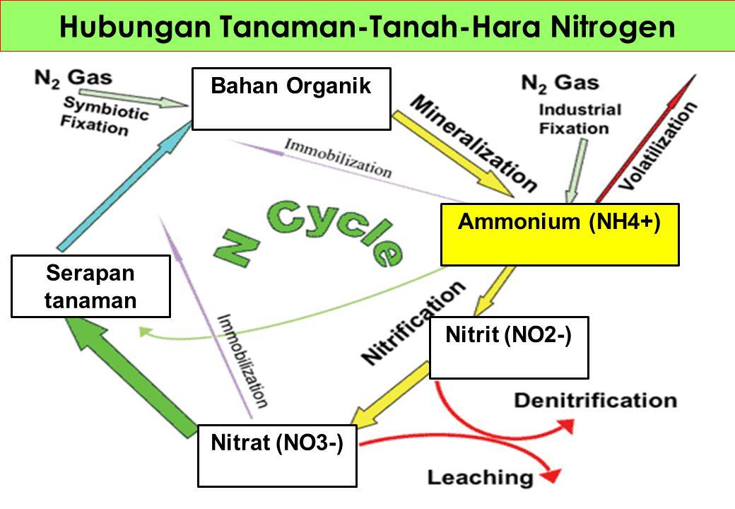 Hubungan Tanaman-Tanah-Hara Nitrogen Serapan tanaman Bahan Organik Nitrat (NO3-) Nitrit (NO2-) Ammonium (NH4+)