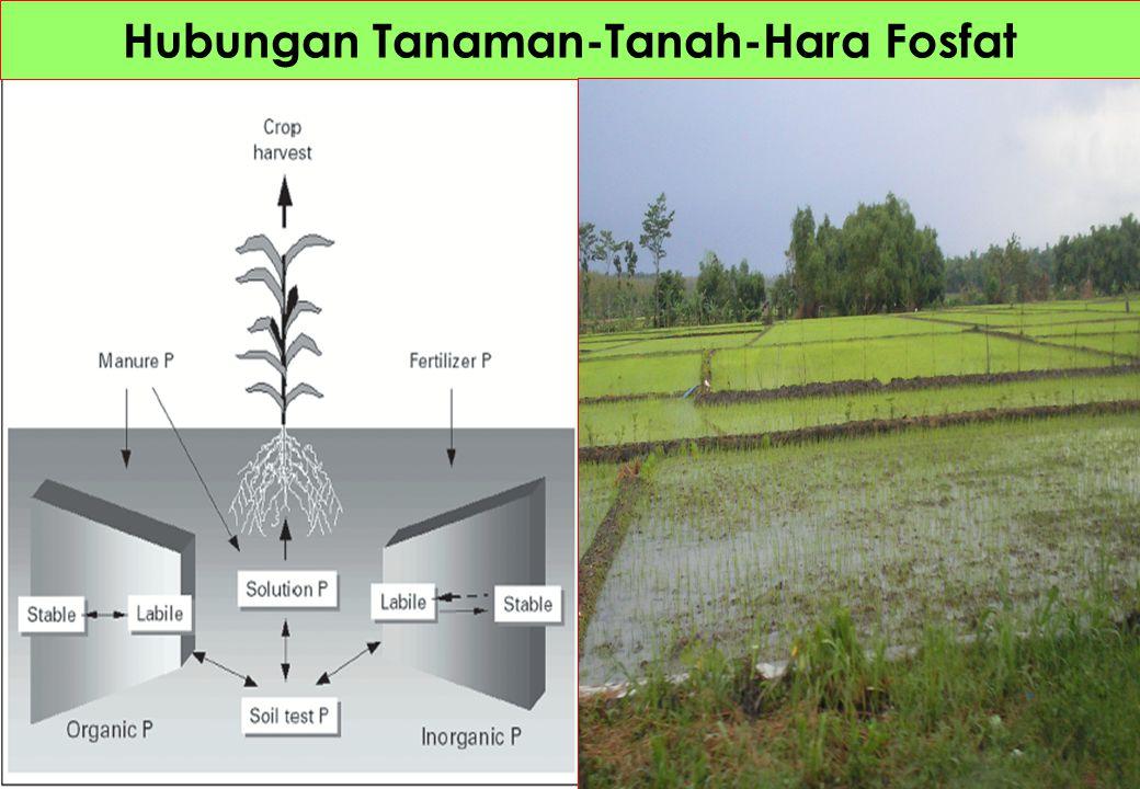 Memanipulasi transpor unsur hara dalam tumbuhan 1.Meningkatkan pertumbuhan dan hasil tanaman 2.Increase plant nutritional quality and density 3.Increase removal of soil contaminants (as in phyto- remediation)