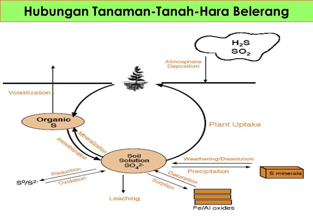 Siklus Belerang di Alam Gas H2S Minyak Batubara Residu tanaman dan ternak Mieral tanah