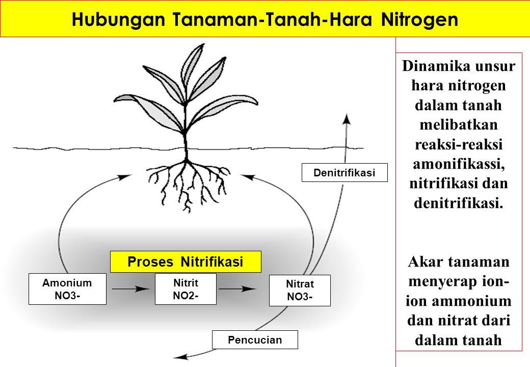 Hubungan Tanaman-Tanah-Hara-Pupuk Fosfat Panen tanaman Pakan ternak Residu organik Pupuk fosfat Erosi dan Runoff P-organik dalam humus Serapan tanaman Padatan P- anorganik P - Larut P - jerap