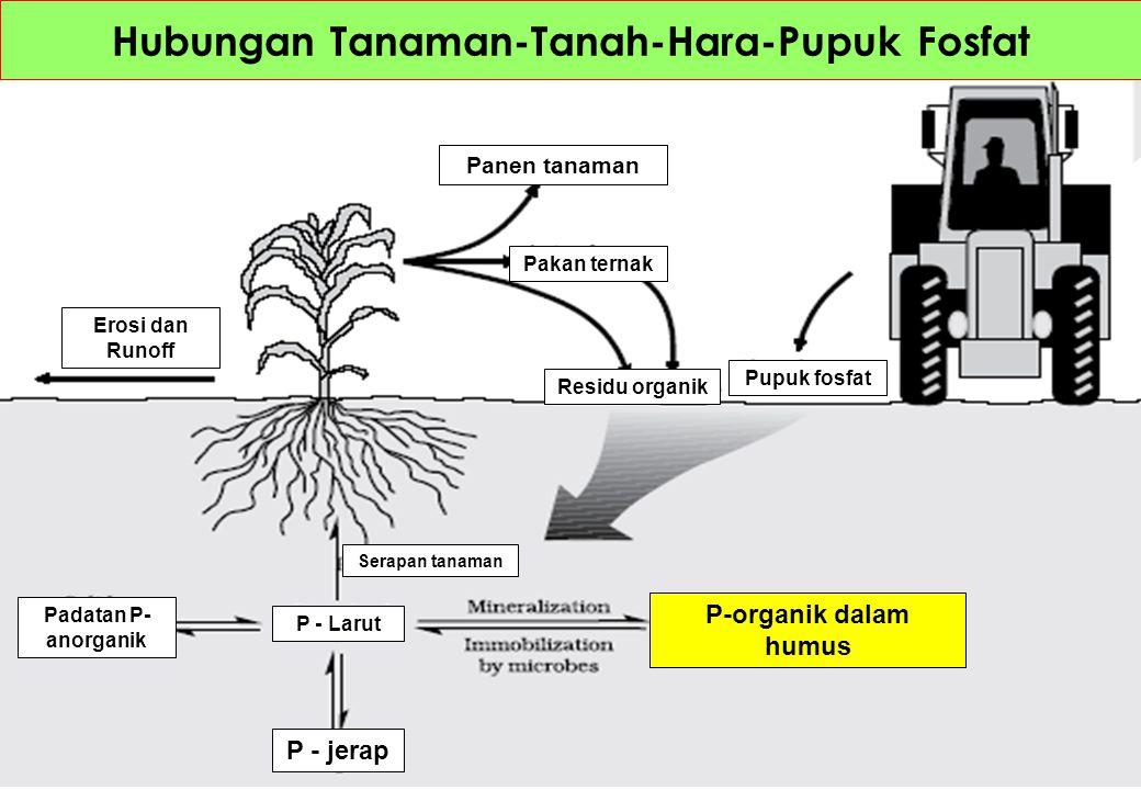 Hubungan Tanaman-Tanah-Hara-Pupuk Fosfat Panen tanaman Pakan ternak Residu organik Pupuk fosfat Erosi dan Runoff P-organik dalam humus Serapan tanaman