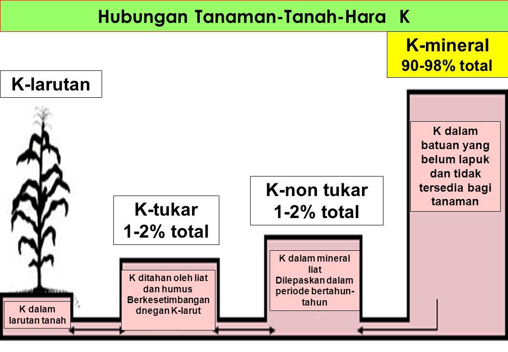Hubungan Tanaman-Tanah-Hara K K-larutan K-tukar 1-2% total K-non tukar 1-2% total K-mineral 90-98% total K dalam batuan yang belum lapuk dan tidak ter