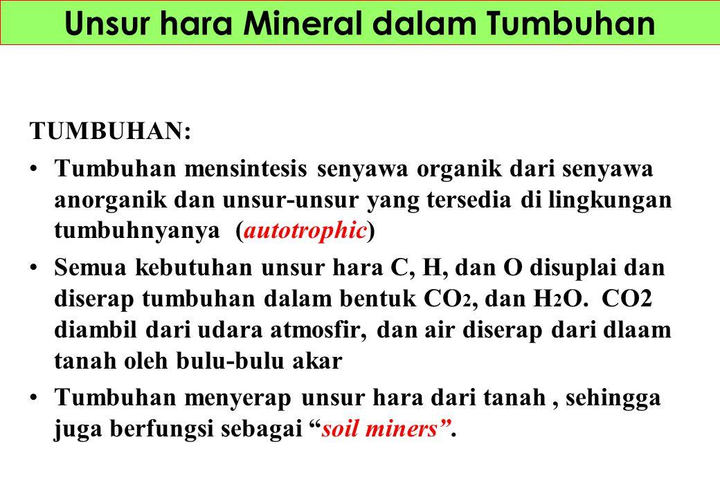 Unsur hara Mineral dalam Tumbuhan TUMBUHAN: Tumbuhan mensintesis senyawa organik dari senyawa anorganik dan unsur-unsur yang tersedia di lingkungan tu