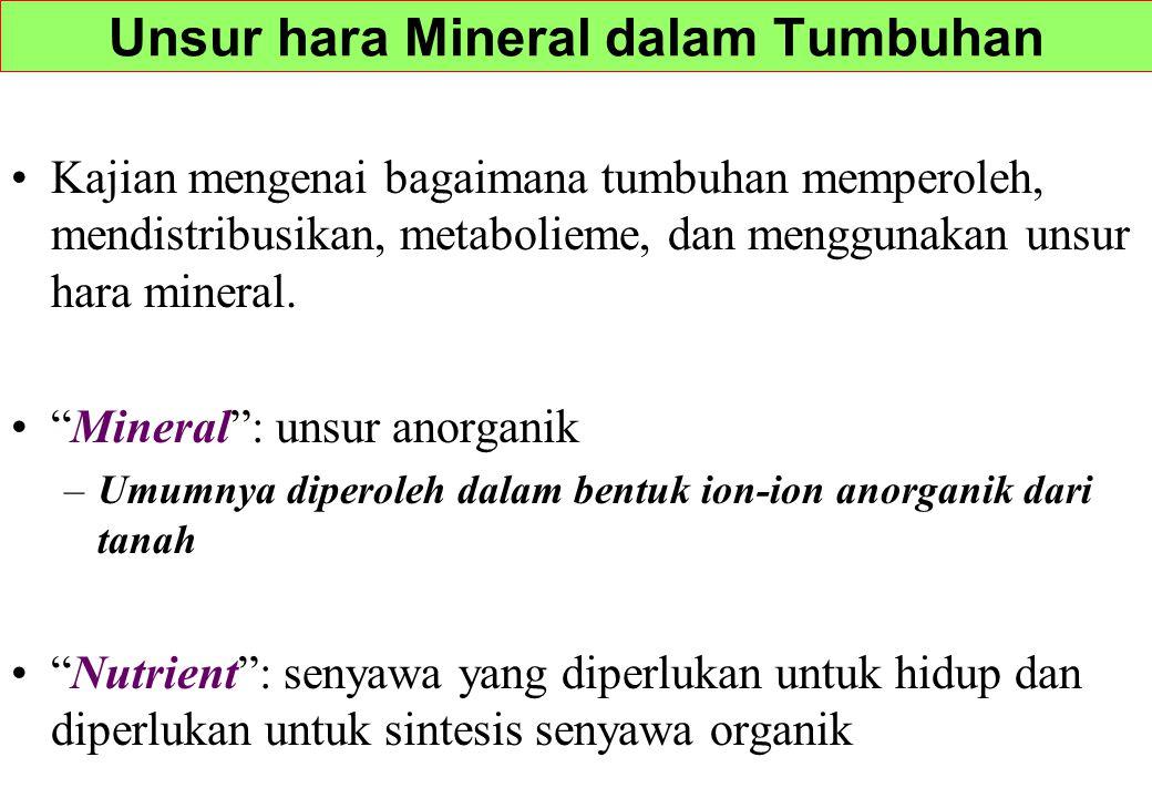"""Kajian mengenai bagaimana tumbuhan memperoleh, mendistribusikan, metabolieme, dan menggunakan unsur hara mineral. """"Mineral"""": unsur anorganik –Umumnya"""