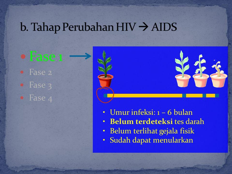 Fase 1 Fase 2 Fase 3 Fase 4 Umur infeksi: 1 – 6 bulan Belum terdeteksi tes darah Belum terlihat gejala fisik Sudah dapat menularkan