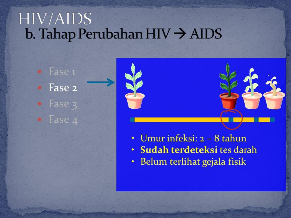 Fase 1 Fase 2 Fase 3 Fase 4 Umur infeksi: 2 – 8 tahun Sudah terdeteksi tes darah Belum terlihat gejala fisik