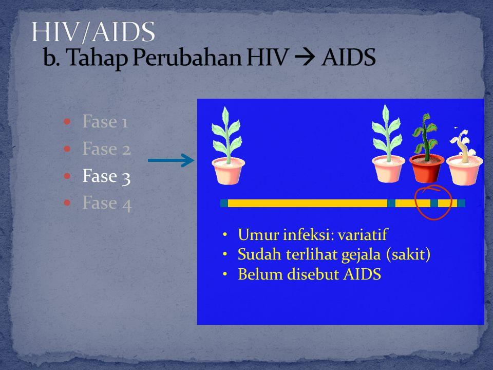 Fase 1 Fase 2 Fase 3 Fase 4 Umur infeksi: variatif Sudah terlihat gejala (sakit) Belum disebut AIDS