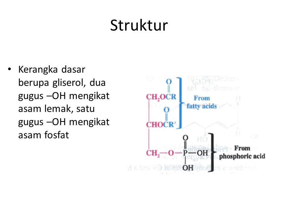 Struktur Kerangka dasar berupa gliserol, dua gugus –OH mengikat asam lemak, satu gugus –OH mengikat asam fosfat