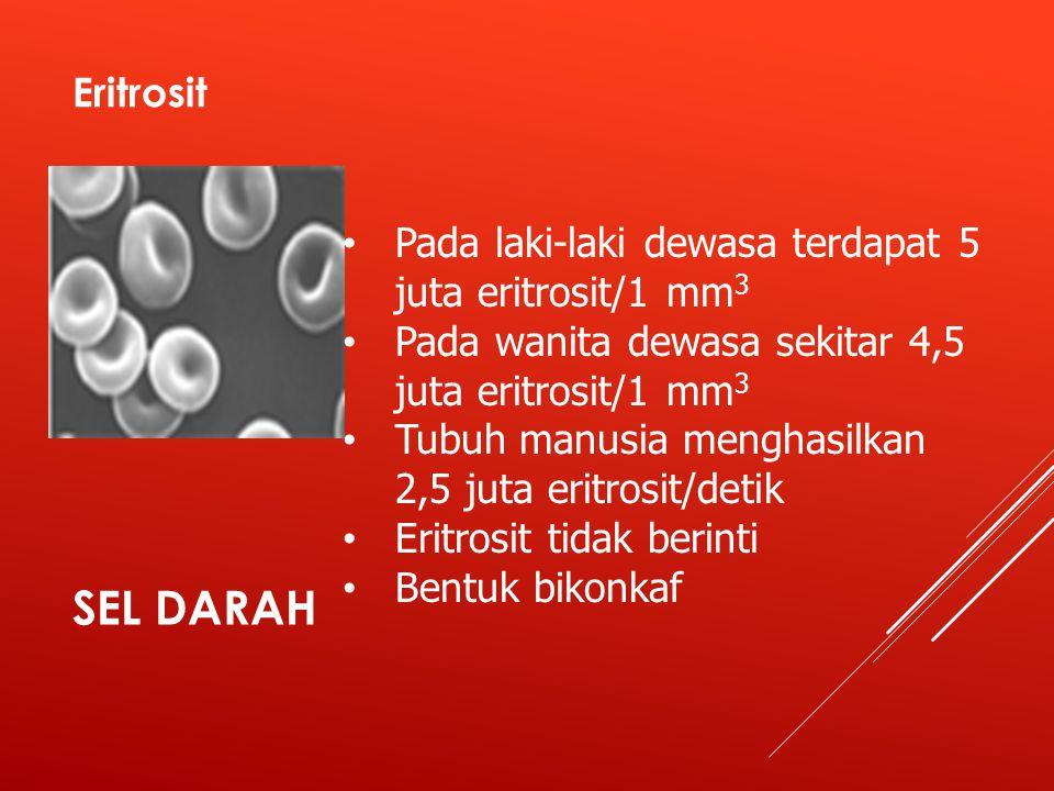 SEL DARAH Eritrosit Pada laki-laki dewasa terdapat 5 juta eritrosit/1 mm 3 Pada wanita dewasa sekitar 4,5 juta eritrosit/1 mm 3 Tubuh manusia menghasilkan 2,5 juta eritrosit/detik Eritrosit tidak berinti Bentuk bikonkaf