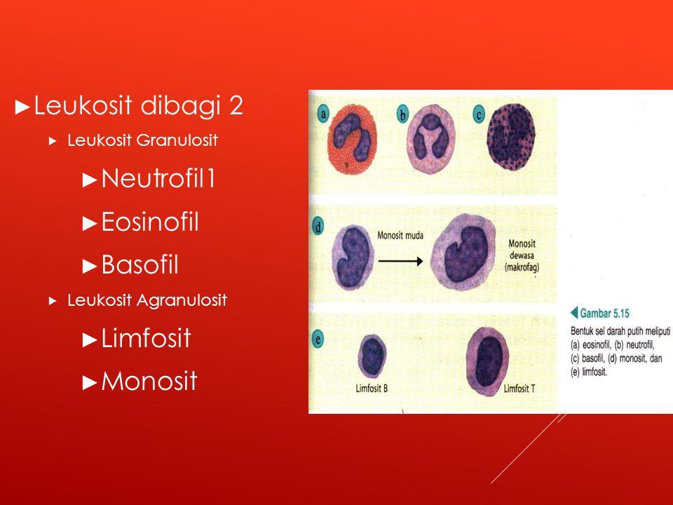 ► Leukosit dibagi 2  Leukosit Granulosit ► Neutrofil1 ► Eosinofil ► Basofil  Leukosit Agranulosit ► Limfosit ► Monosit